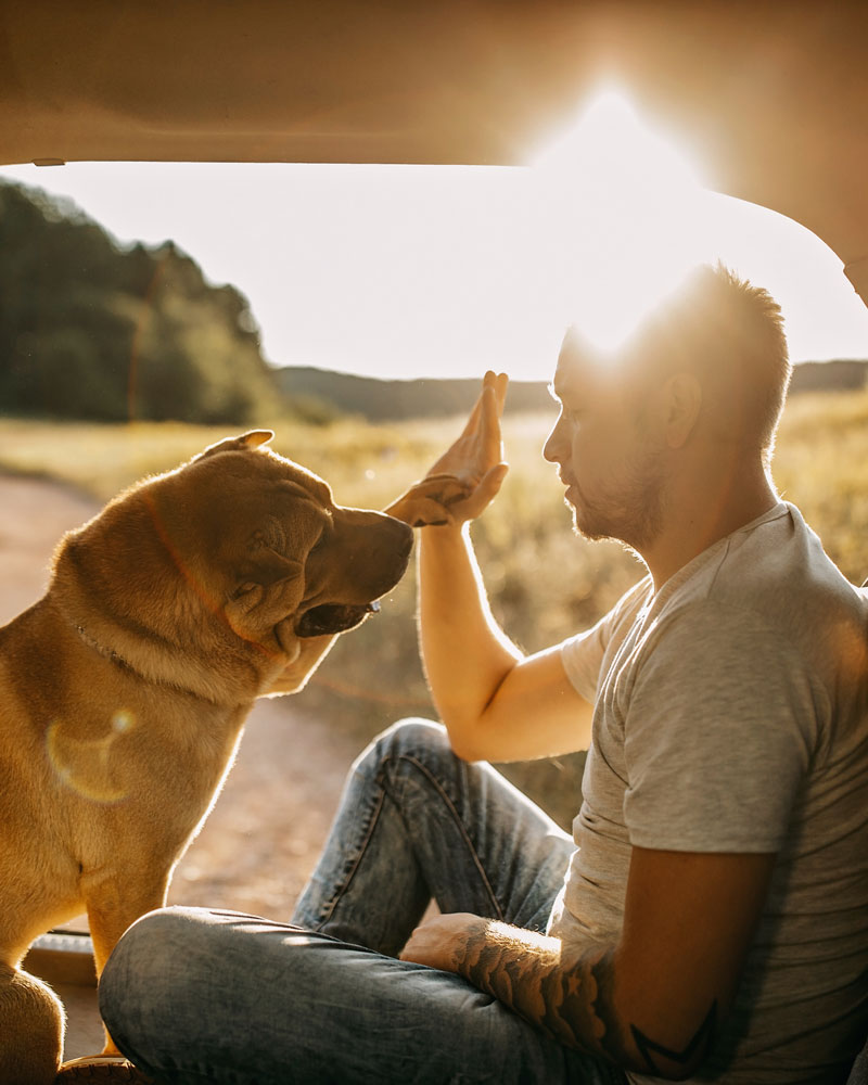 High Five with dog and man